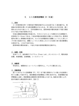 6. ヒトの誘 誘発筋電図 図(H・M 波)