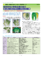 直売所向け野菜品種の紹介