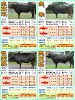 種雄牛紹介③ - 鹿児島県肉用牛改良研究所