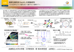 新奇な磁性体 Na2IrO3 の理論研究 兵庫県立大学大学院 工学研究科