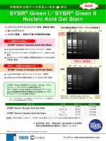 SYBR®GreenII Nucleic Acid Gel Stain