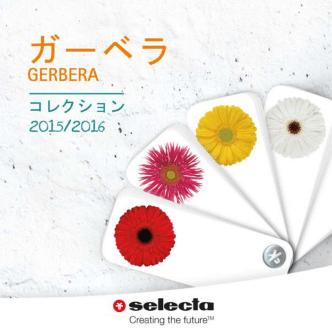 2015 CTガーベラpdf - Selecta Cut Flowers