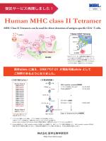 Human MHC class II Tetramer