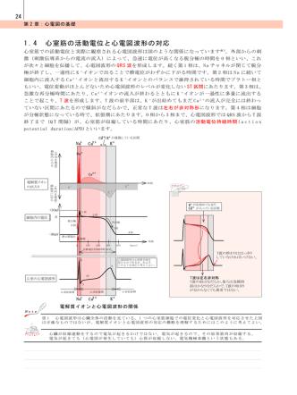 1.4 心室筋の活動電位と心電図波形の対応