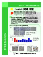 Lm関連リーフレット - オリエンタル酵母工業